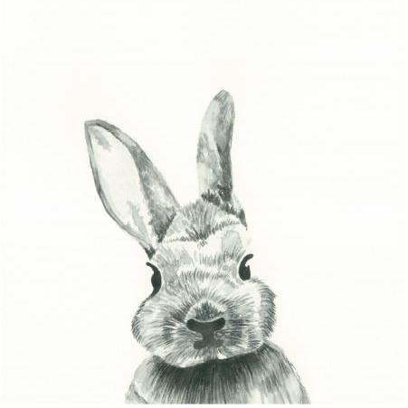 Bailey Bunny.JPG