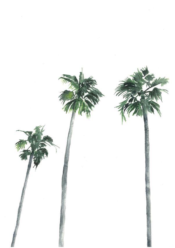 Three Palms png 1.JPG