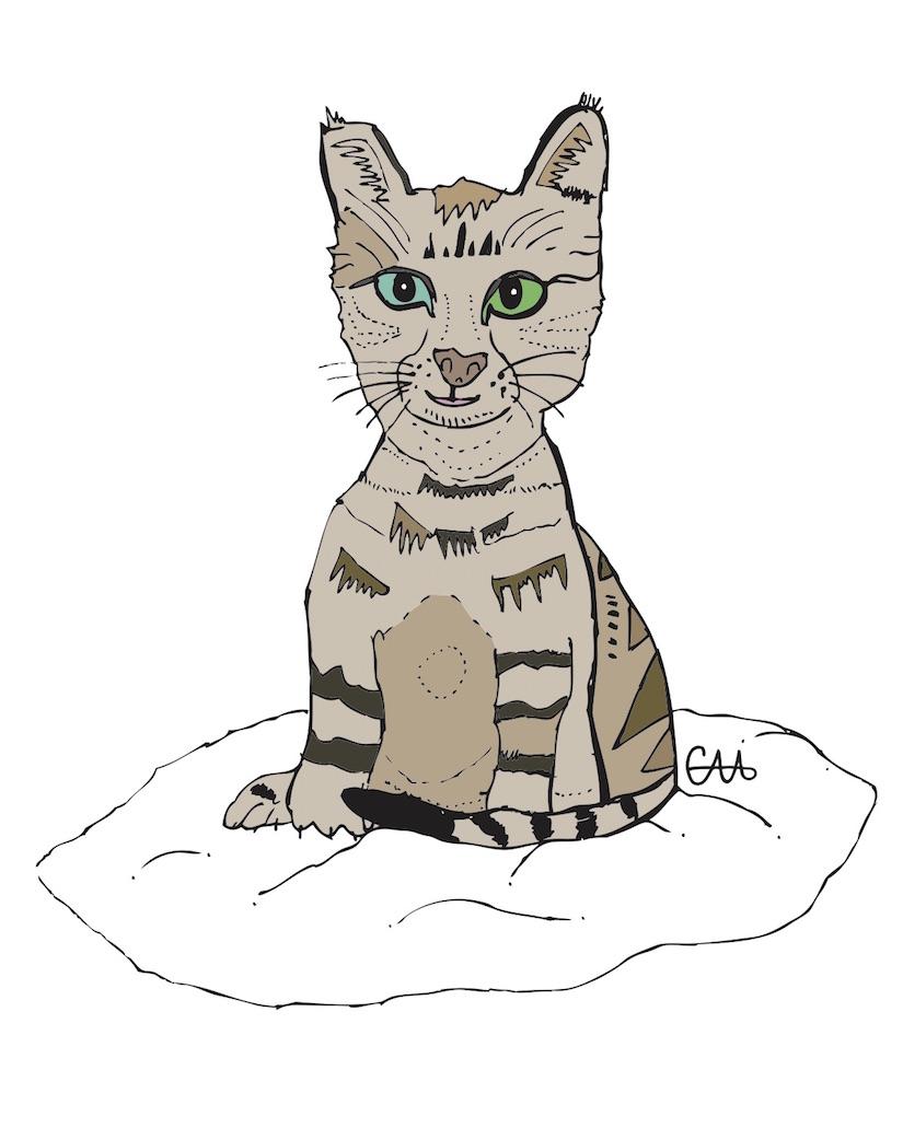 8x10 CAT.jpg