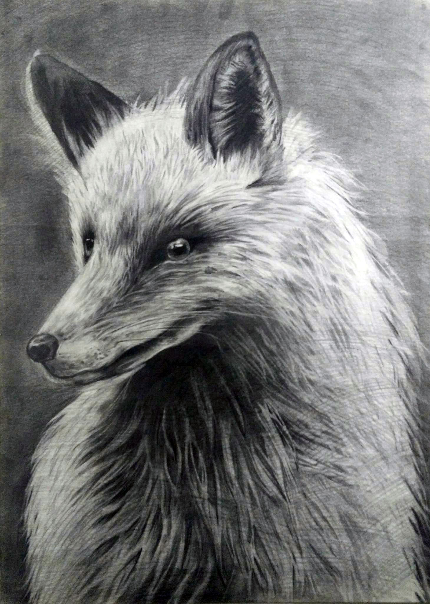 Title: The fox    Tools: Pencil