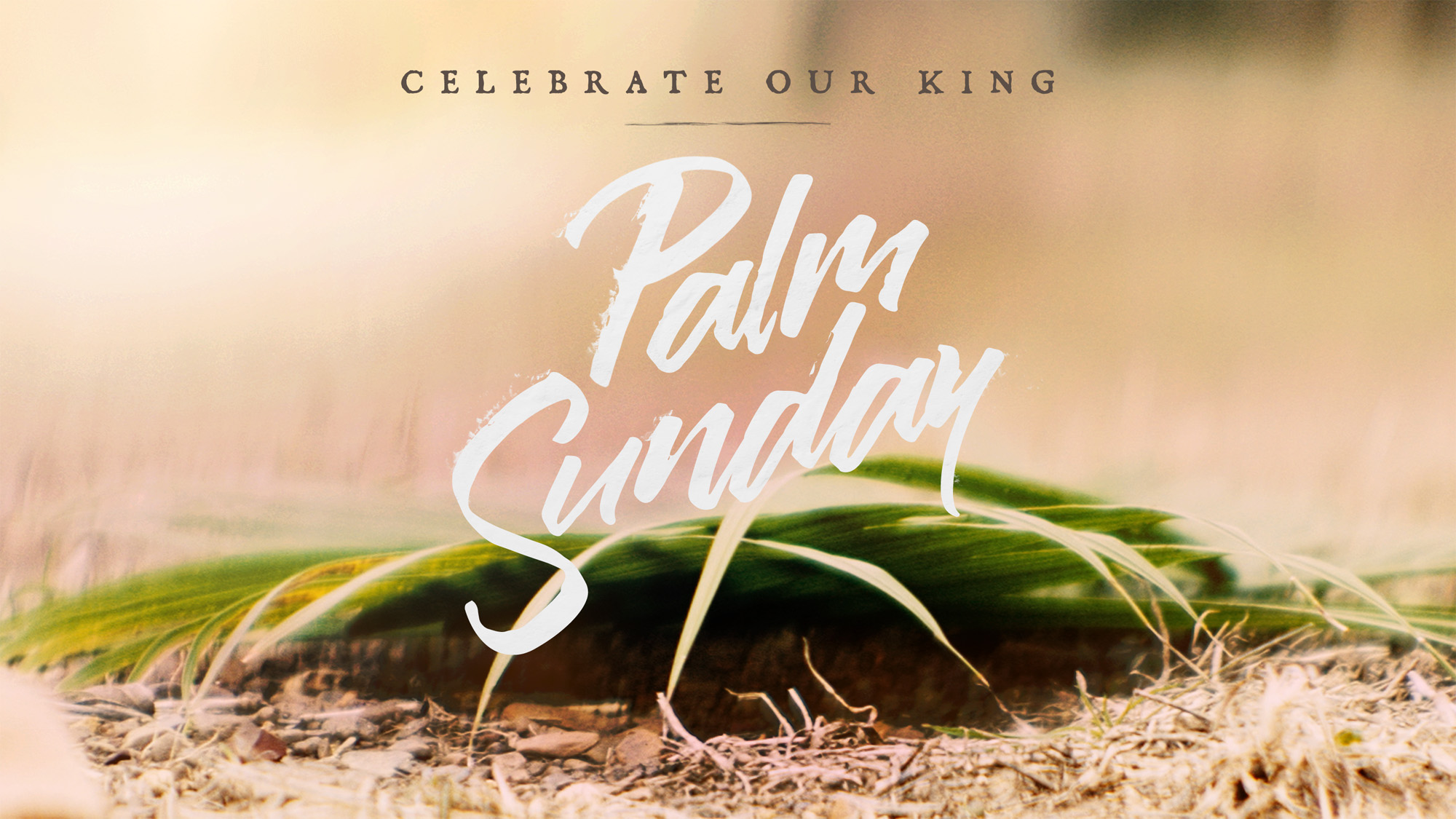 easter_moments_palm_sunday-title-1-Wide 16x9.jpg