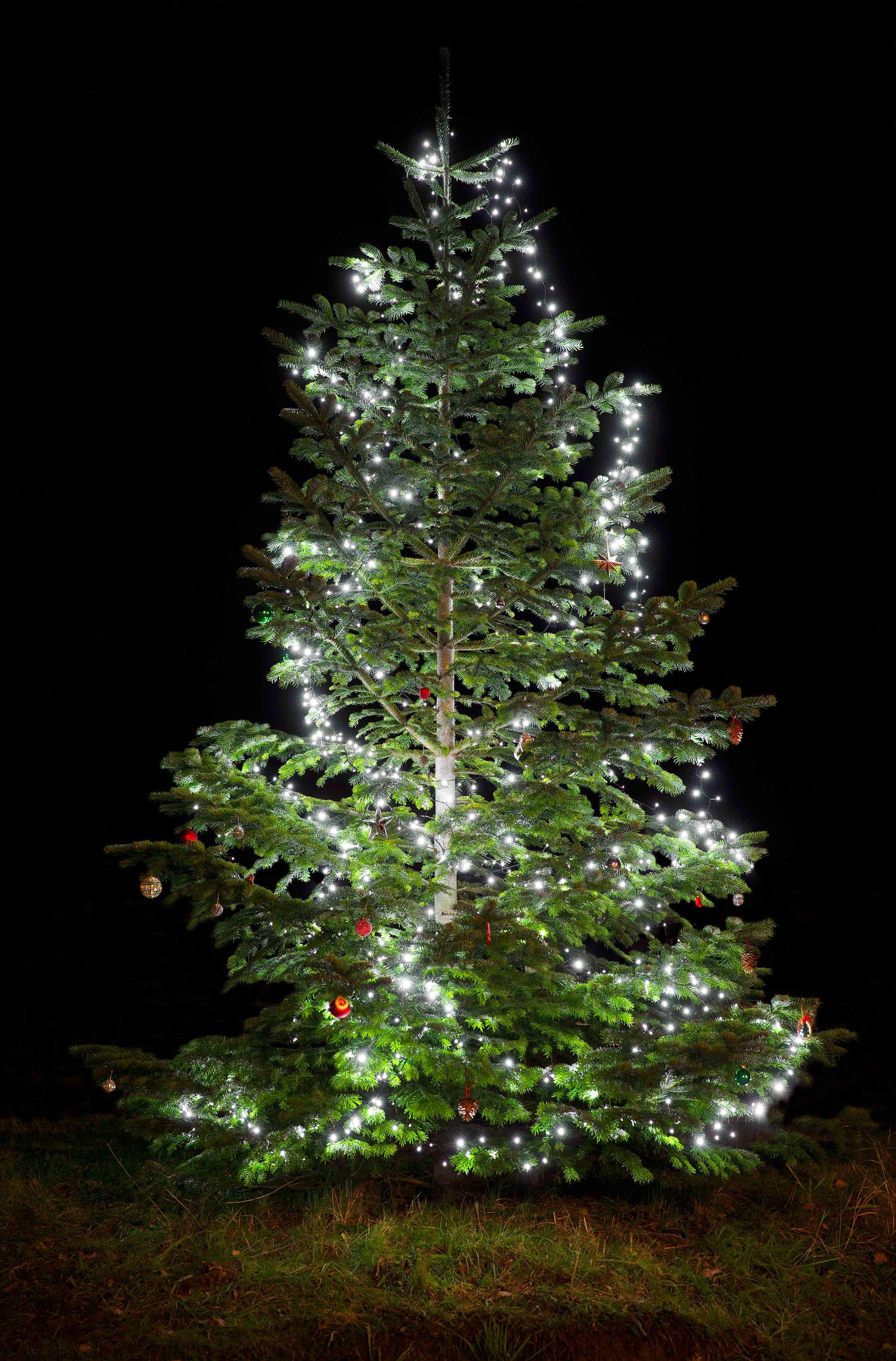 ChristmasTreeEditWEb_6278.jpg