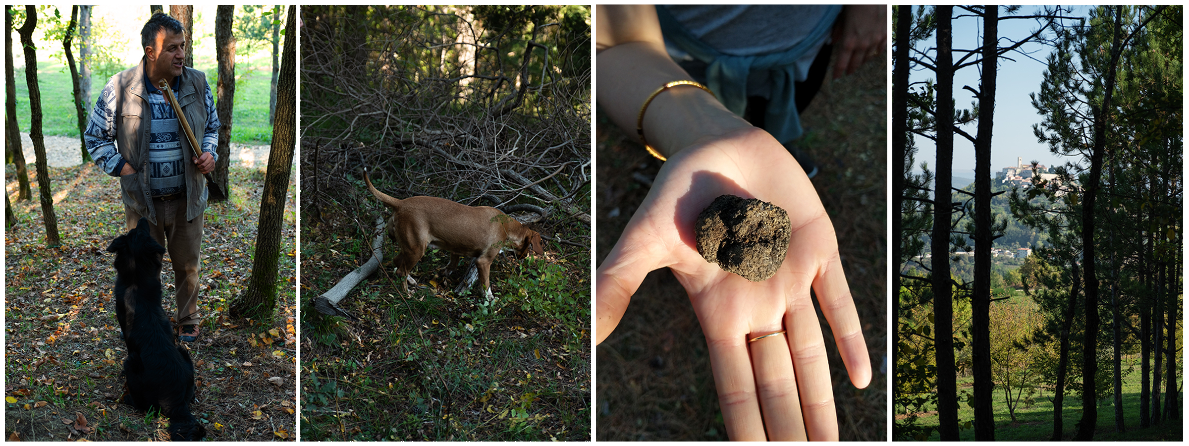 Truffle hunting in the woods was a memorable and fun experience, not to mention a much needed work out before pigging on all the delicious food ;)