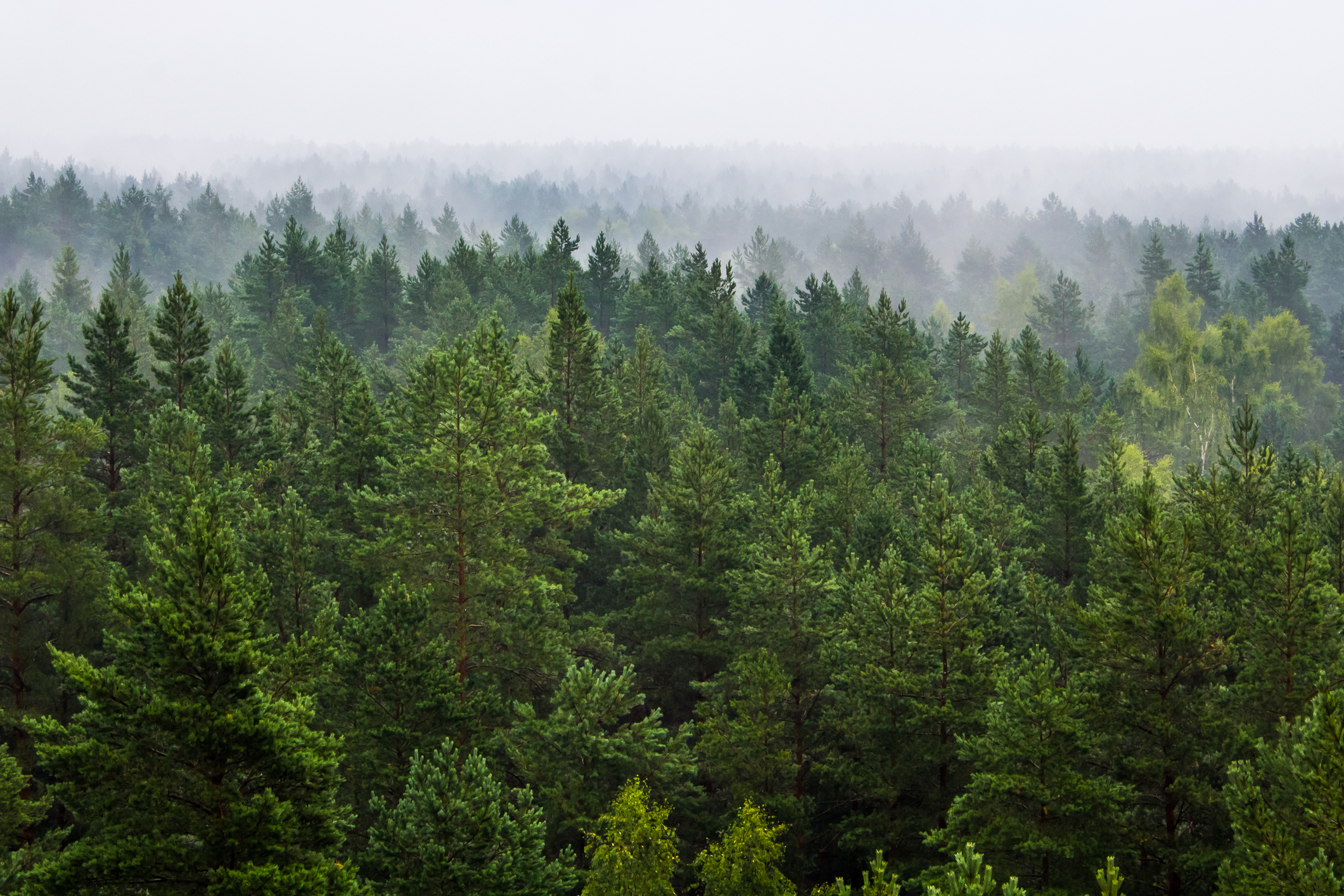 Biomass Fuel - Brooke Energy