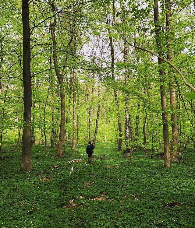 #hareskoven 💚