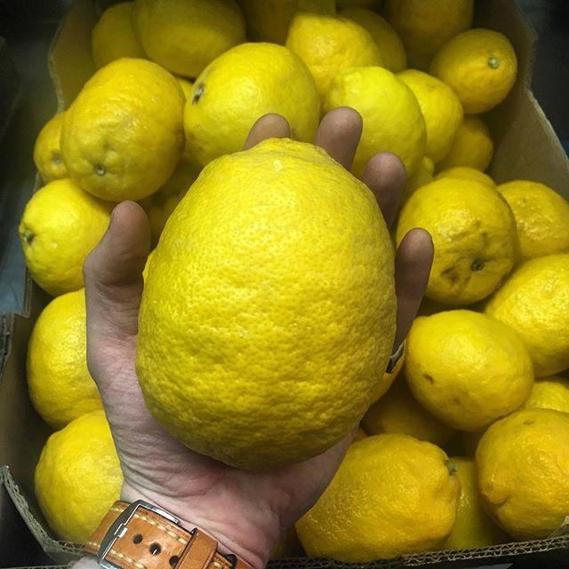 💛💛South African huge set of lemons 💛💛 #big #boss #lemon #saladmafia