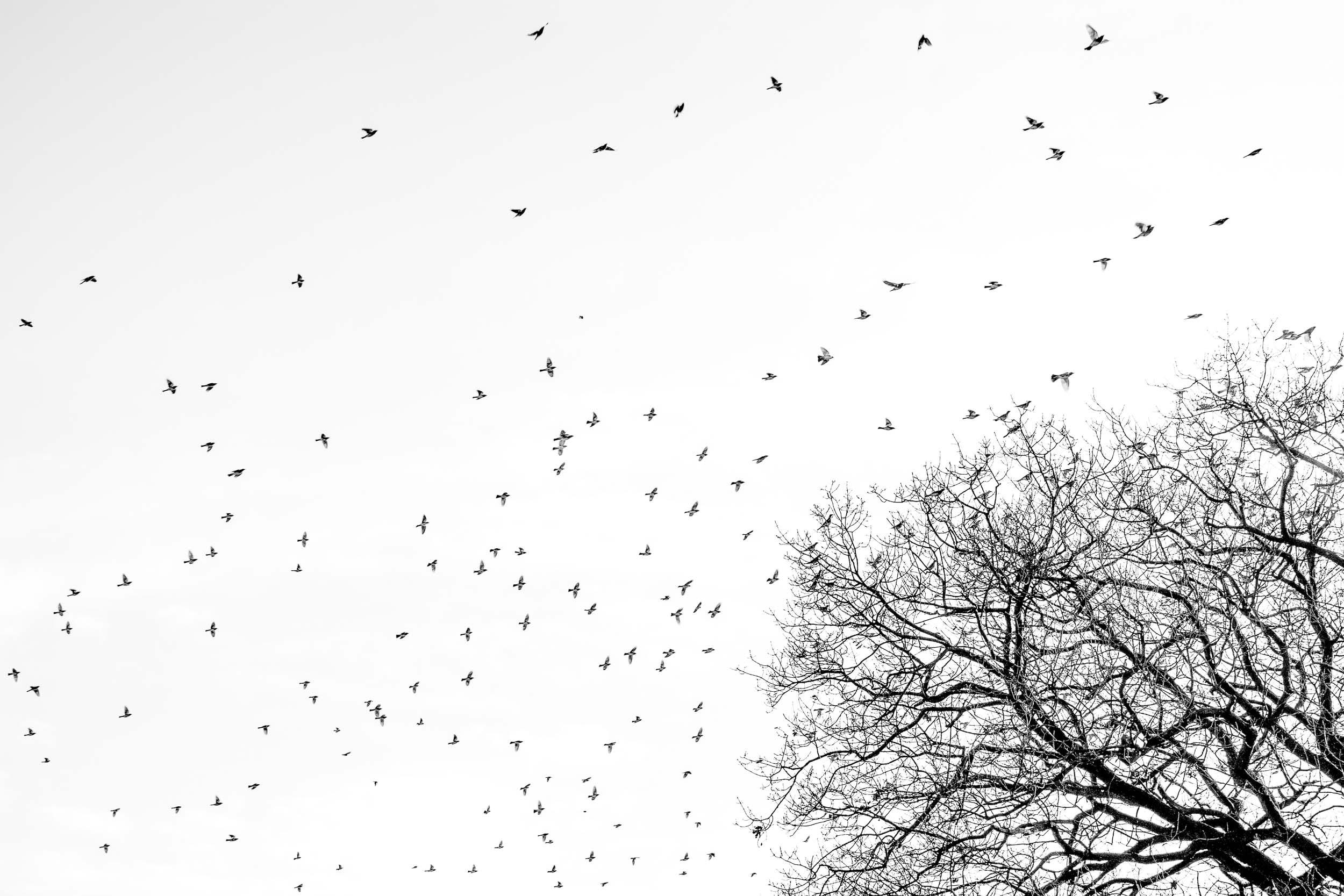 BW Bird + Tree.jpg