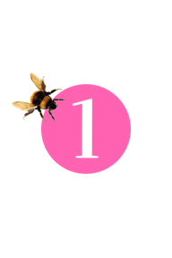 bee 1.png