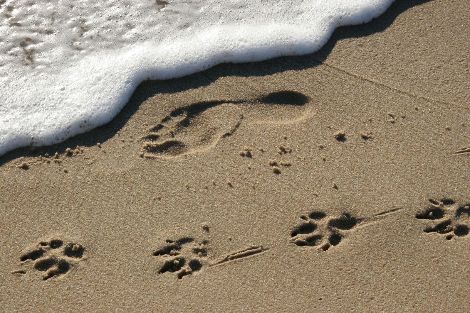 bigstock-Footprints-pawprints-dog-companionship-865429.jpg