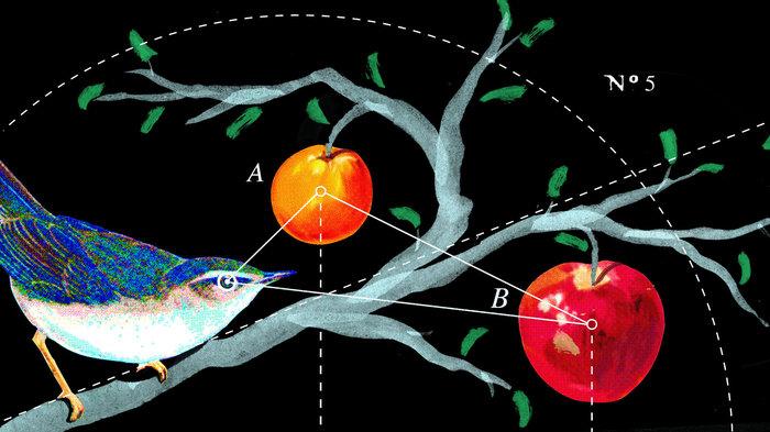 bird_diagram_final_wide-f57ad53cb648cd6a830907907811e189be432798-s700-c85.jpg