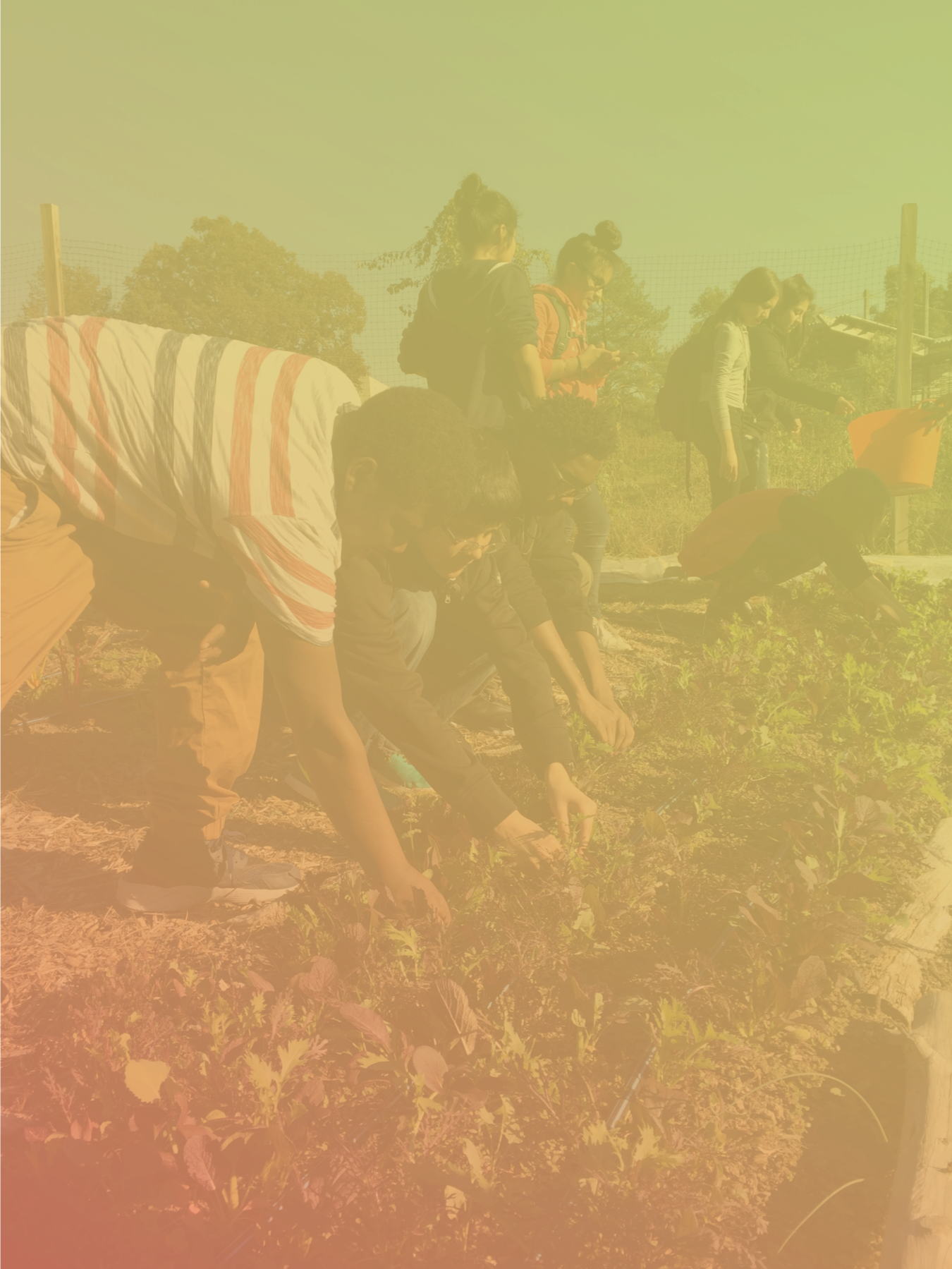 Our Mission - FIG is committed to building just, equitable, and resilient food systems. We believe that all people have the right to access good food — food that nourishes bodies, communities, and the planet.Good food for the common good.