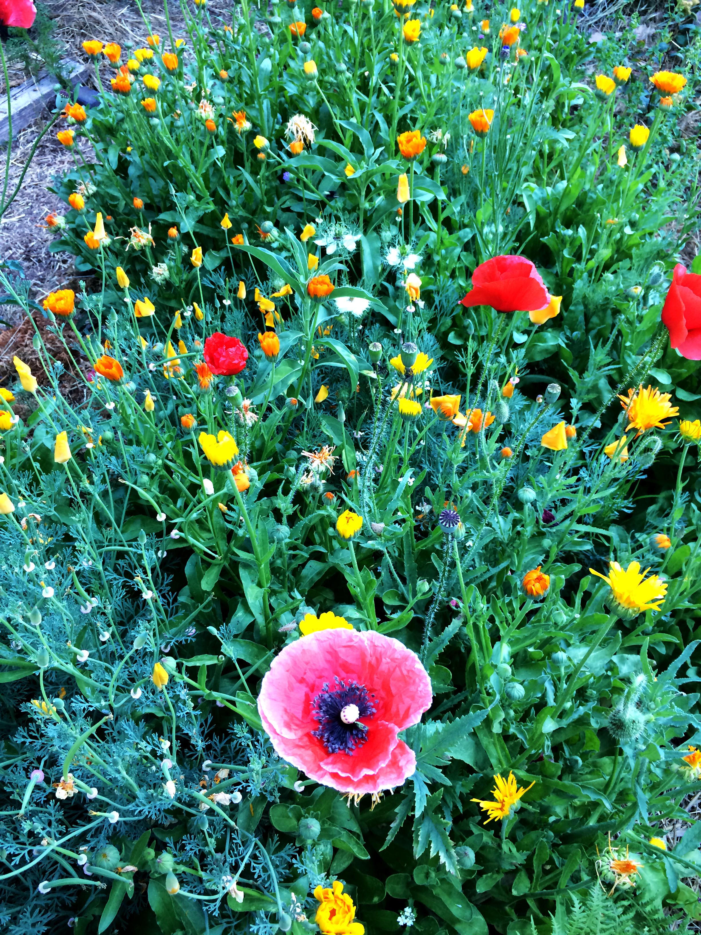 flowers4 copy.jpg