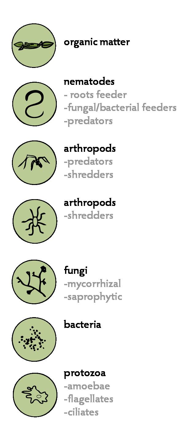 Soil Living Organisms