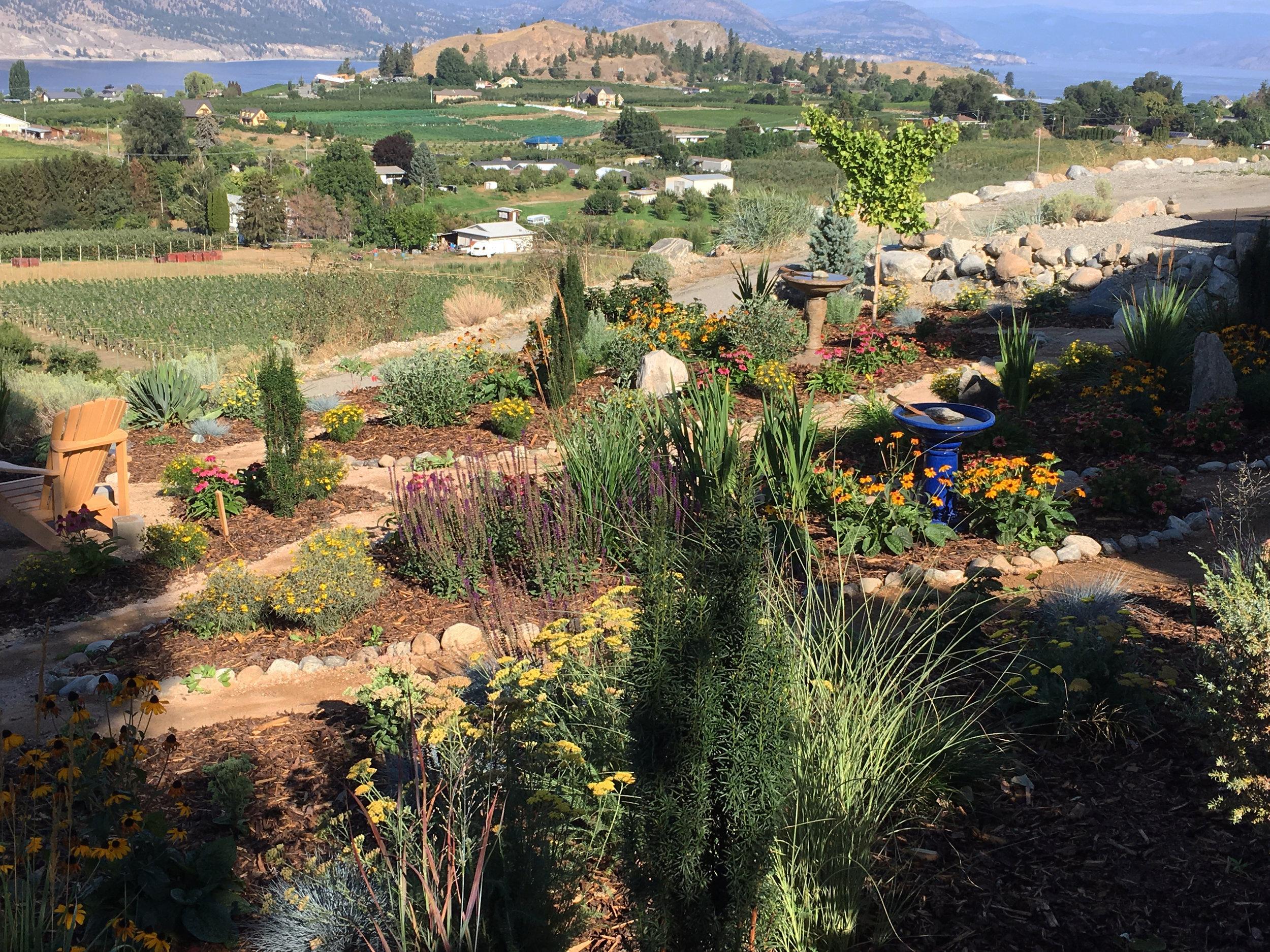 Xeriscape Garden