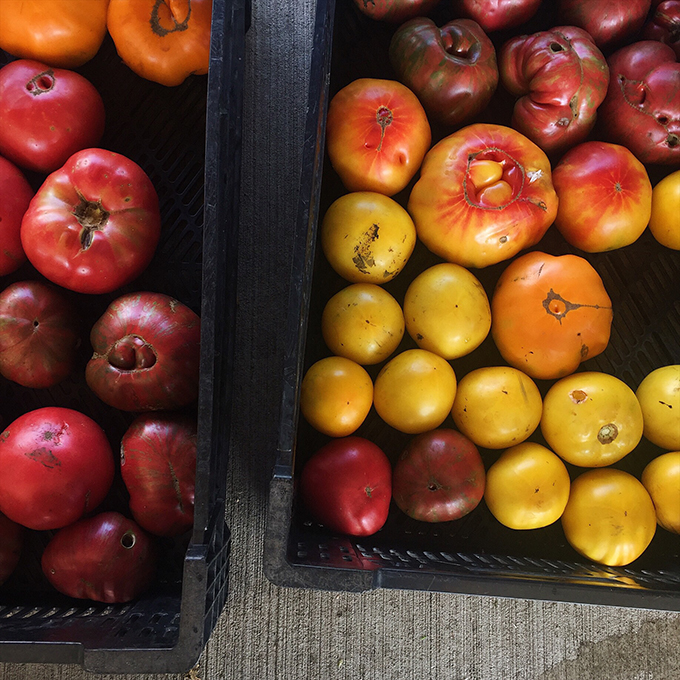 Beautiful heirlooms at our CSA pickup!