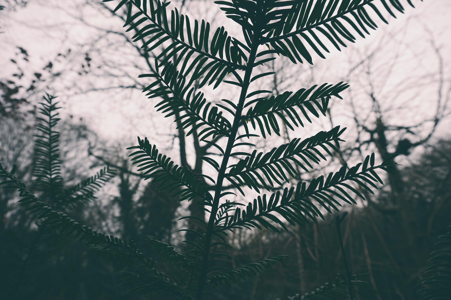2018-01-01_leaves.png
