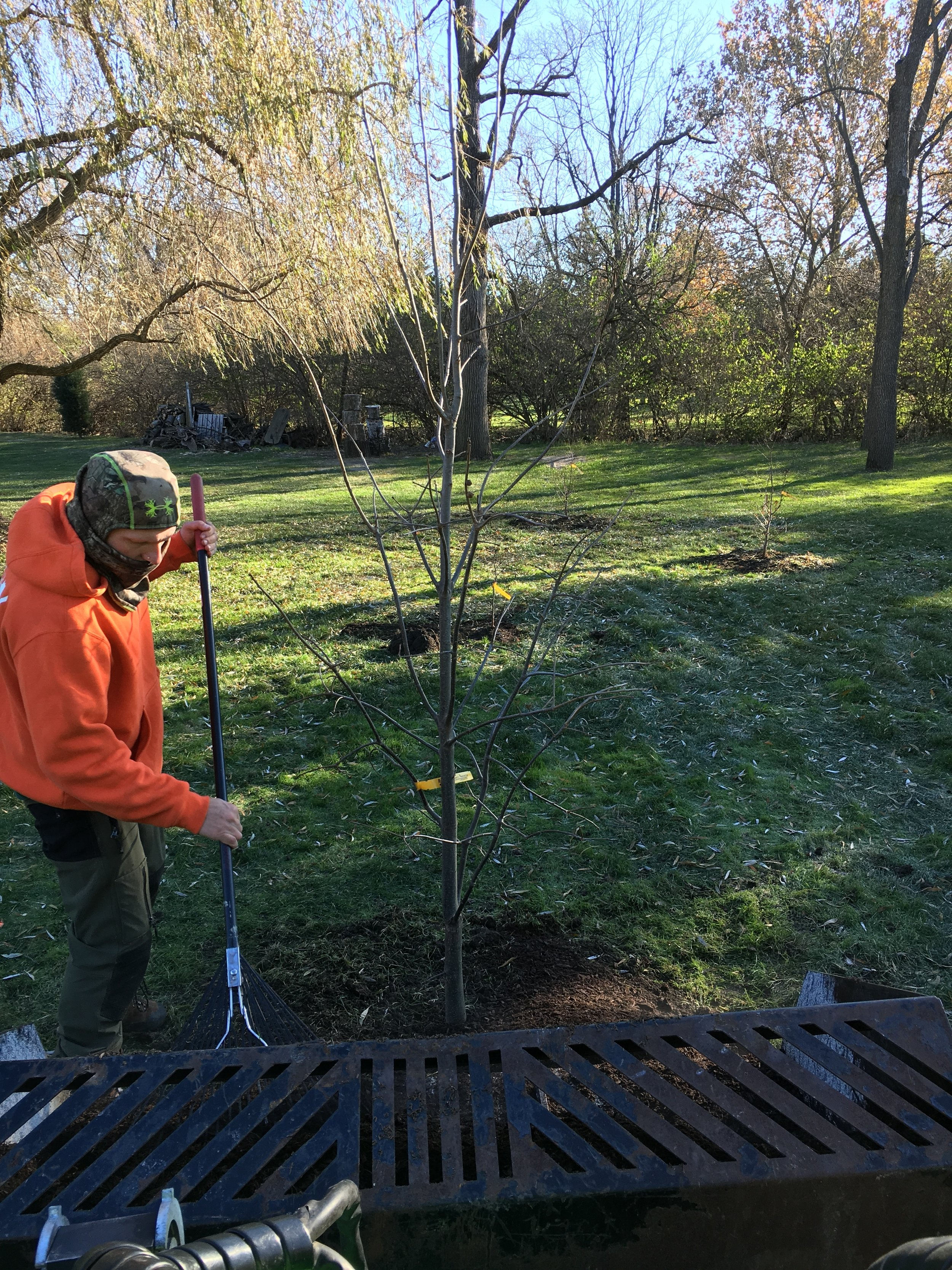 Grela Planting