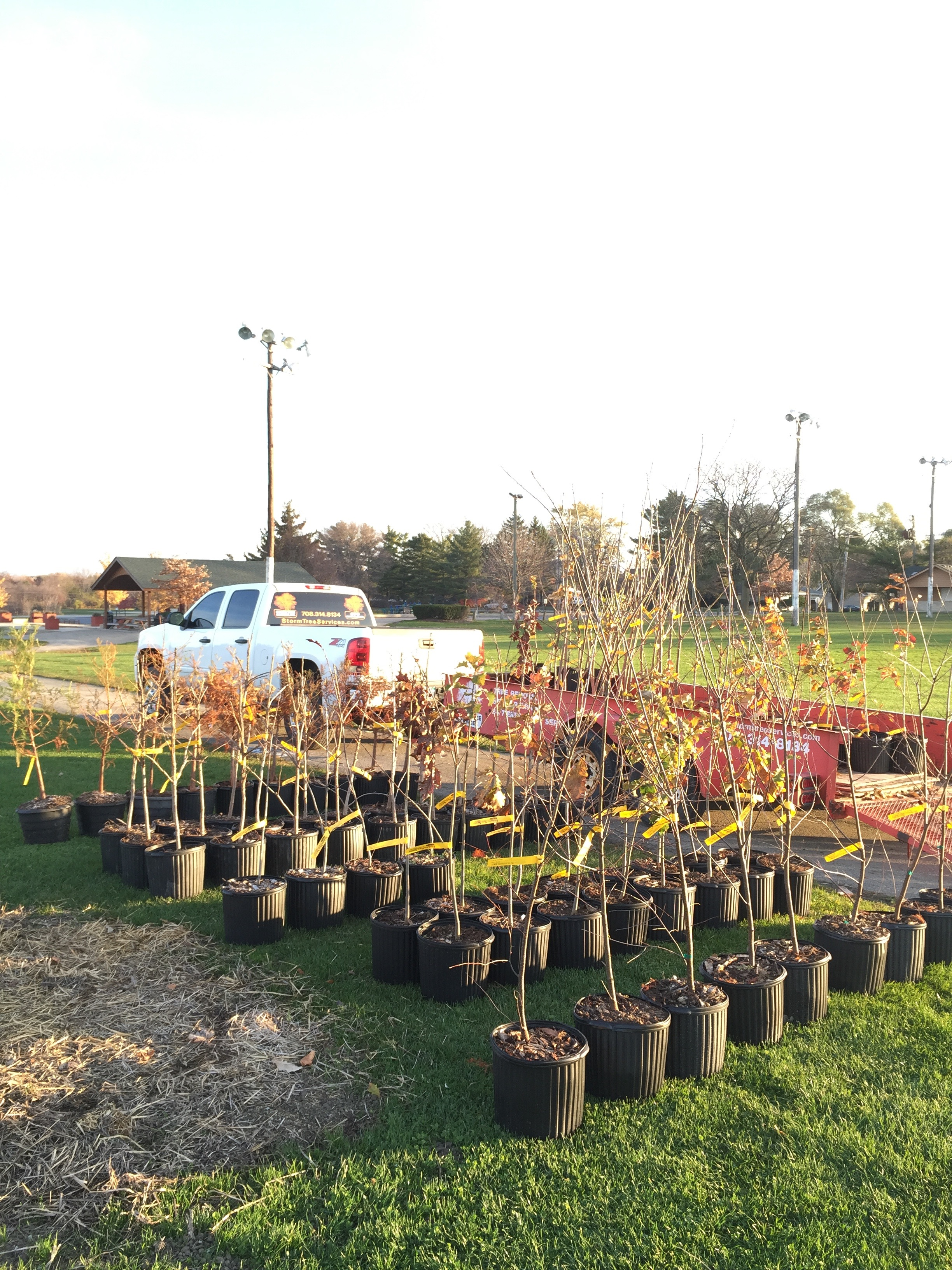 2016 Tree for a Tree Donation to Frankfort Park District