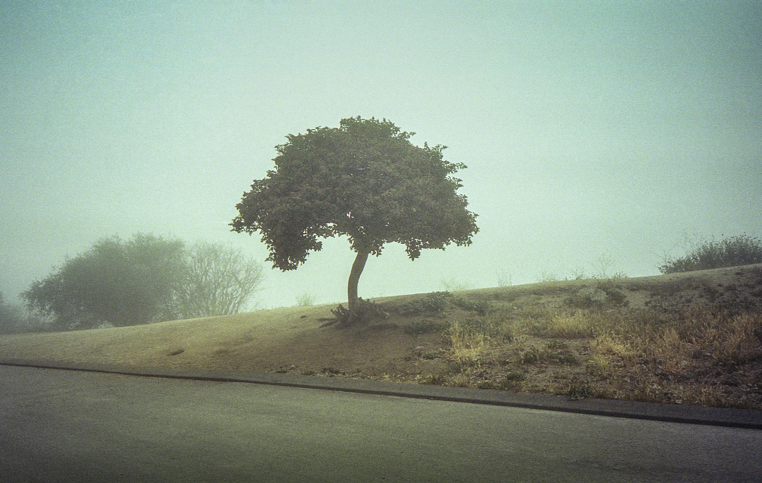 TREE RUNYON-SQ.jpg