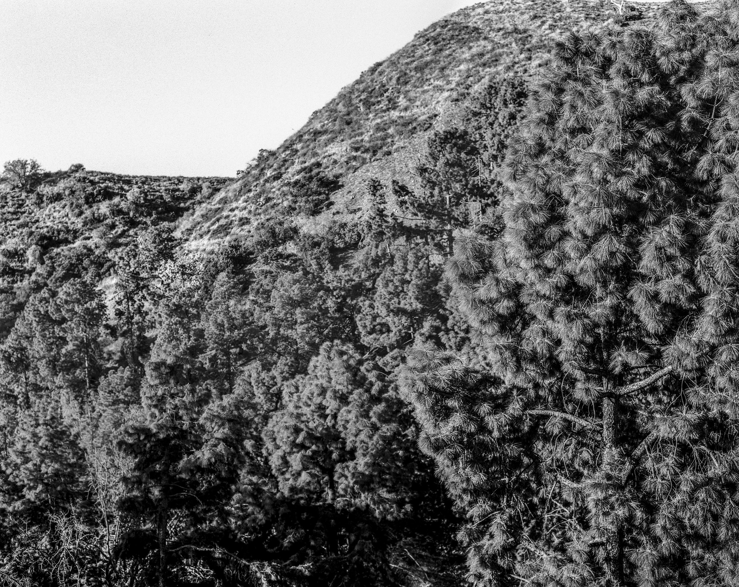 Lake Hollywood - Trees-SQ.jpg