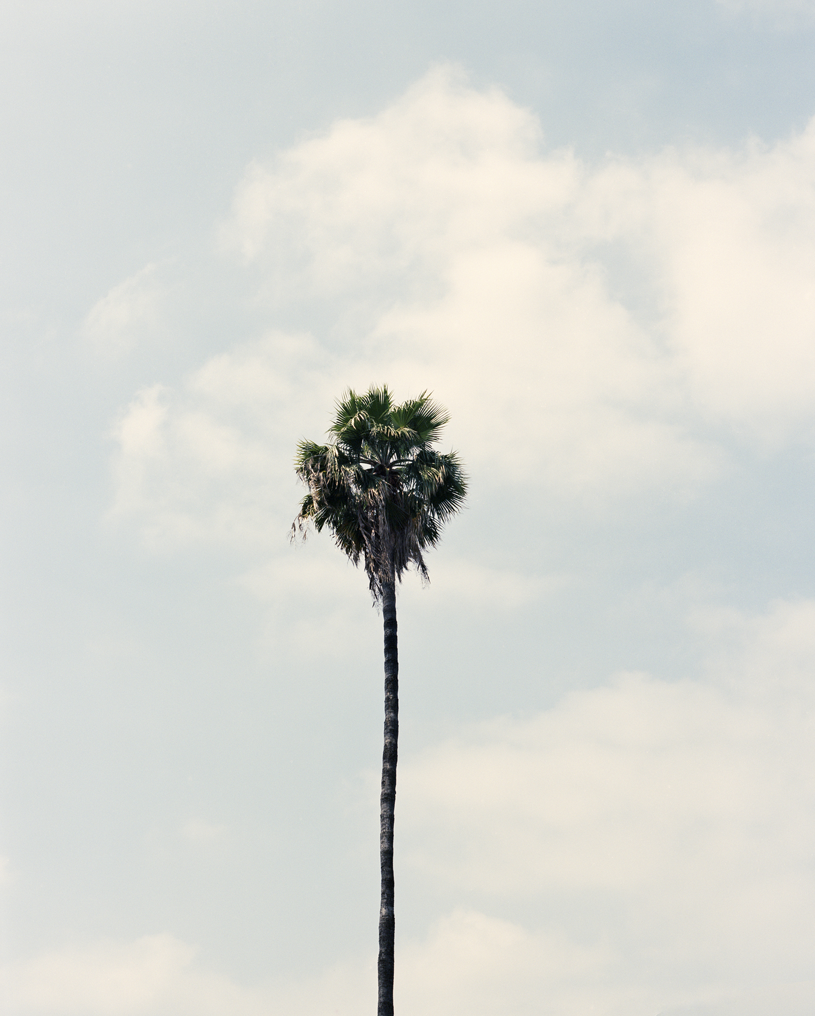 Long Palm 2019 FAIRFAX.SQ.edit.jpg
