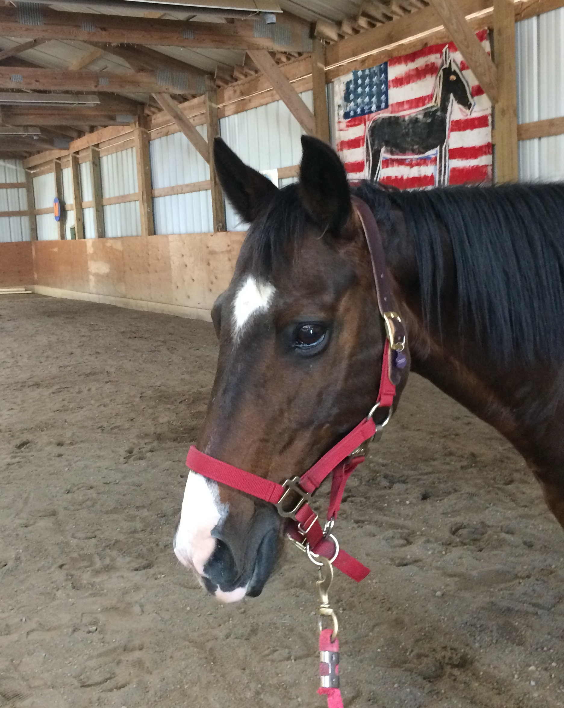 Tito - Tito is our little guy and is often chosen for riders who need a lot of physical support (it's easier to reach them with Tito, who is lower to the ground). Like our other herd members, he is very tolerant of riders who are noisy or unbalanced. He is our newest herd member, only being here since the spring of 2018. He has the cutest face and everyone falls in love when they meet him.