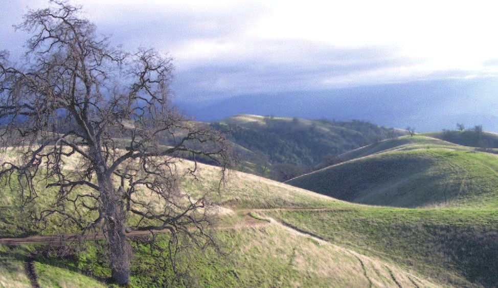 A well-managed, sustainable cattle ranch in a wildland environment ecosystem.