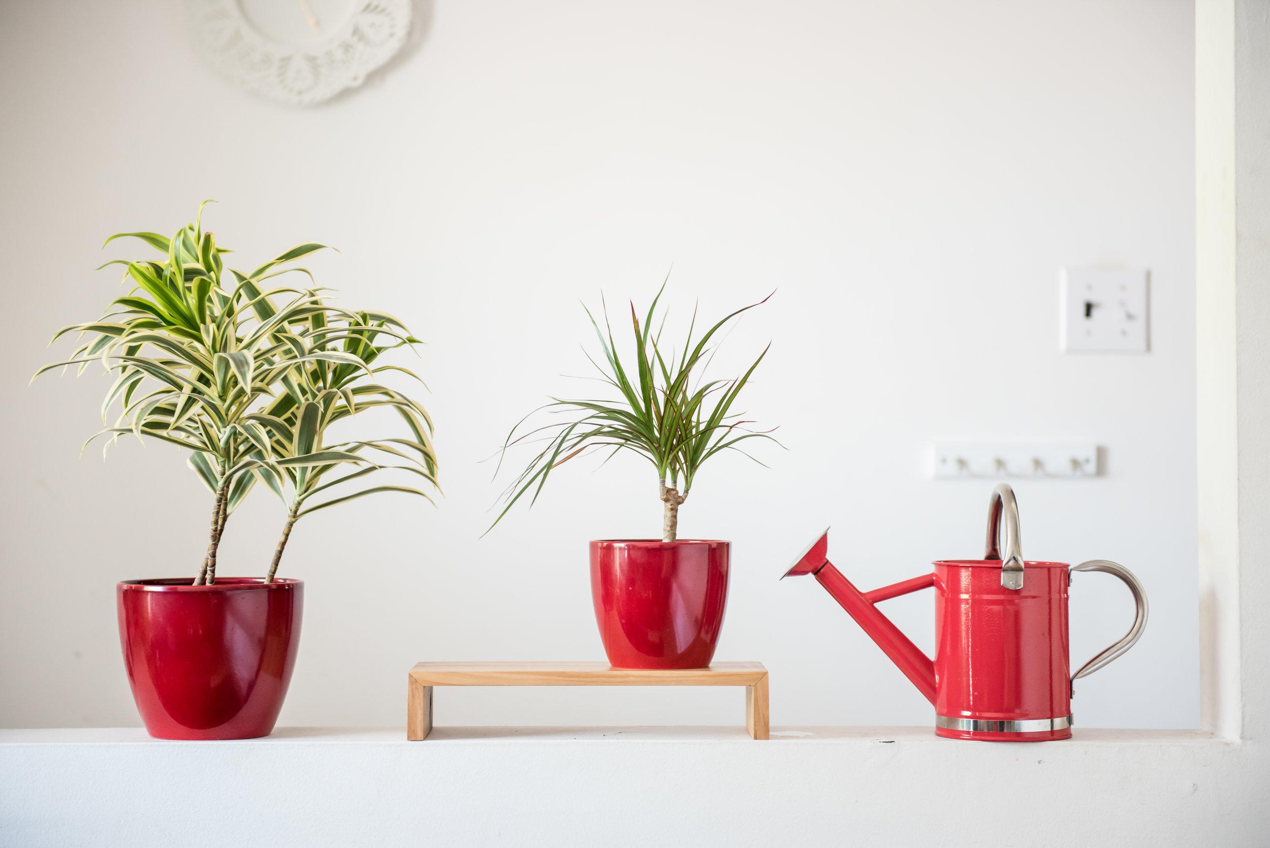 Tea plantae