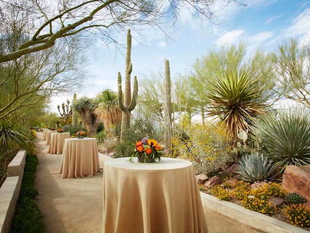 Cactus Alley