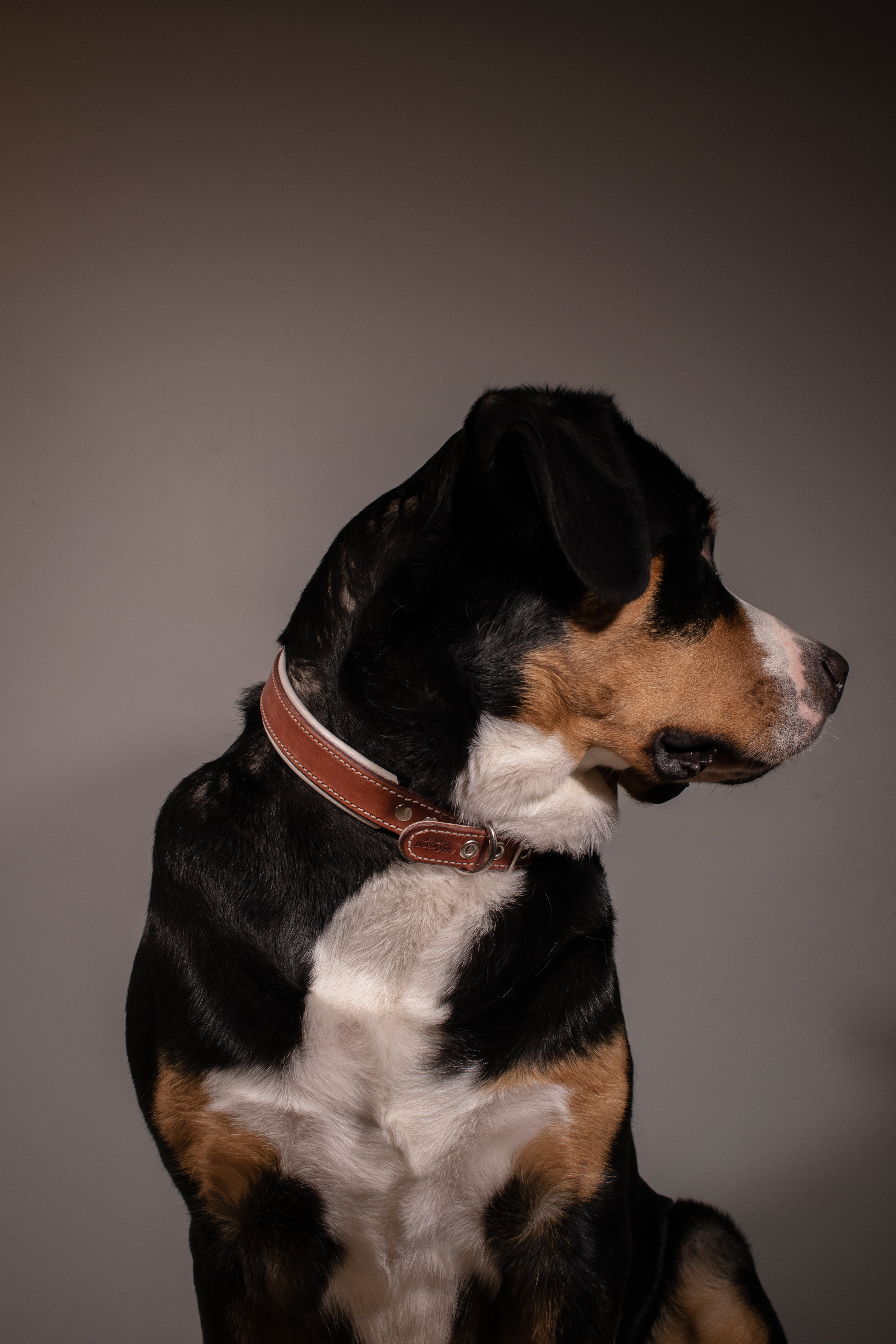 Old Country Leather Collar