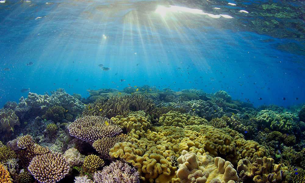 reef-web.jpg