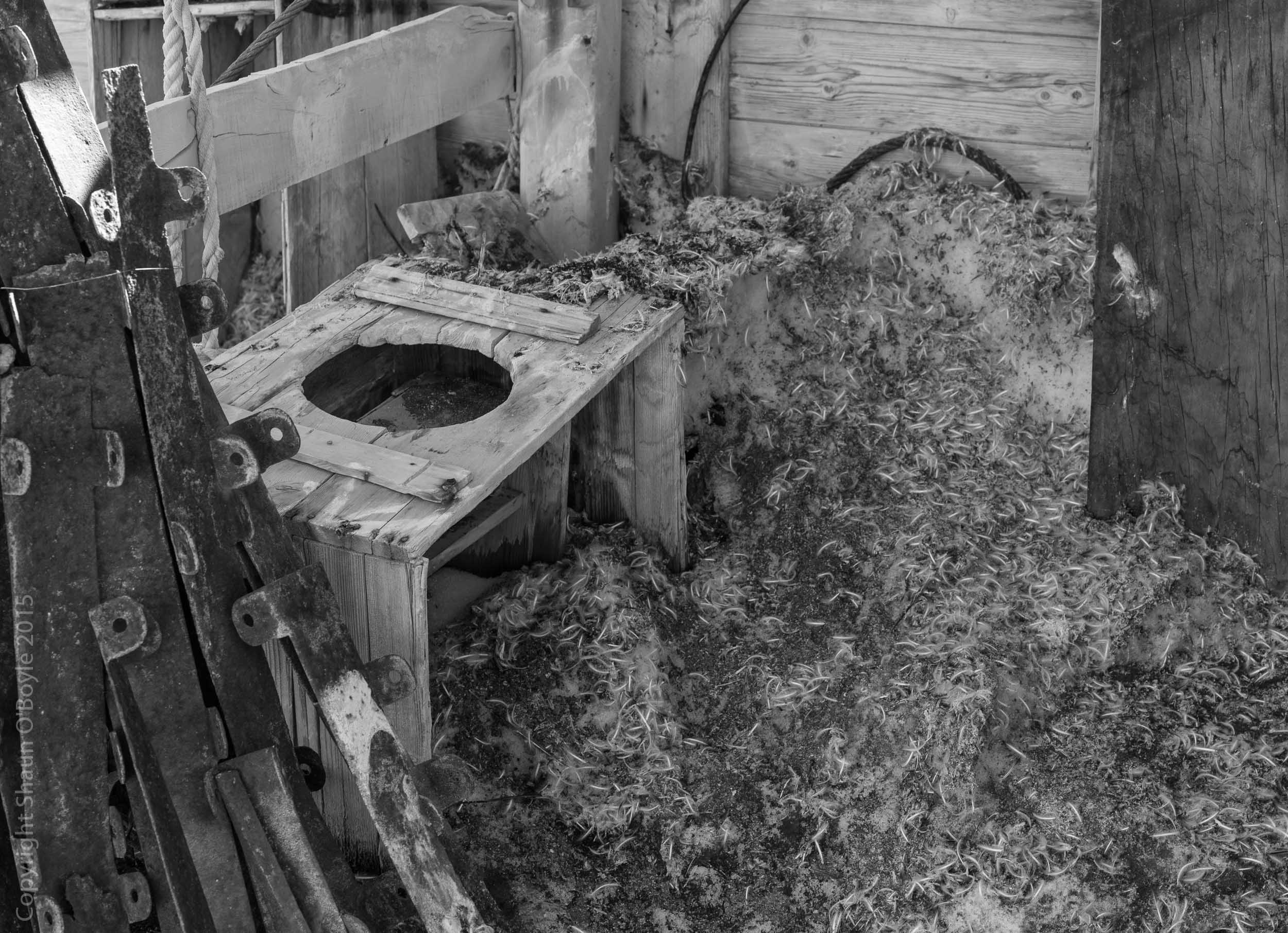 Shackleton's privy, now frequented by penguins