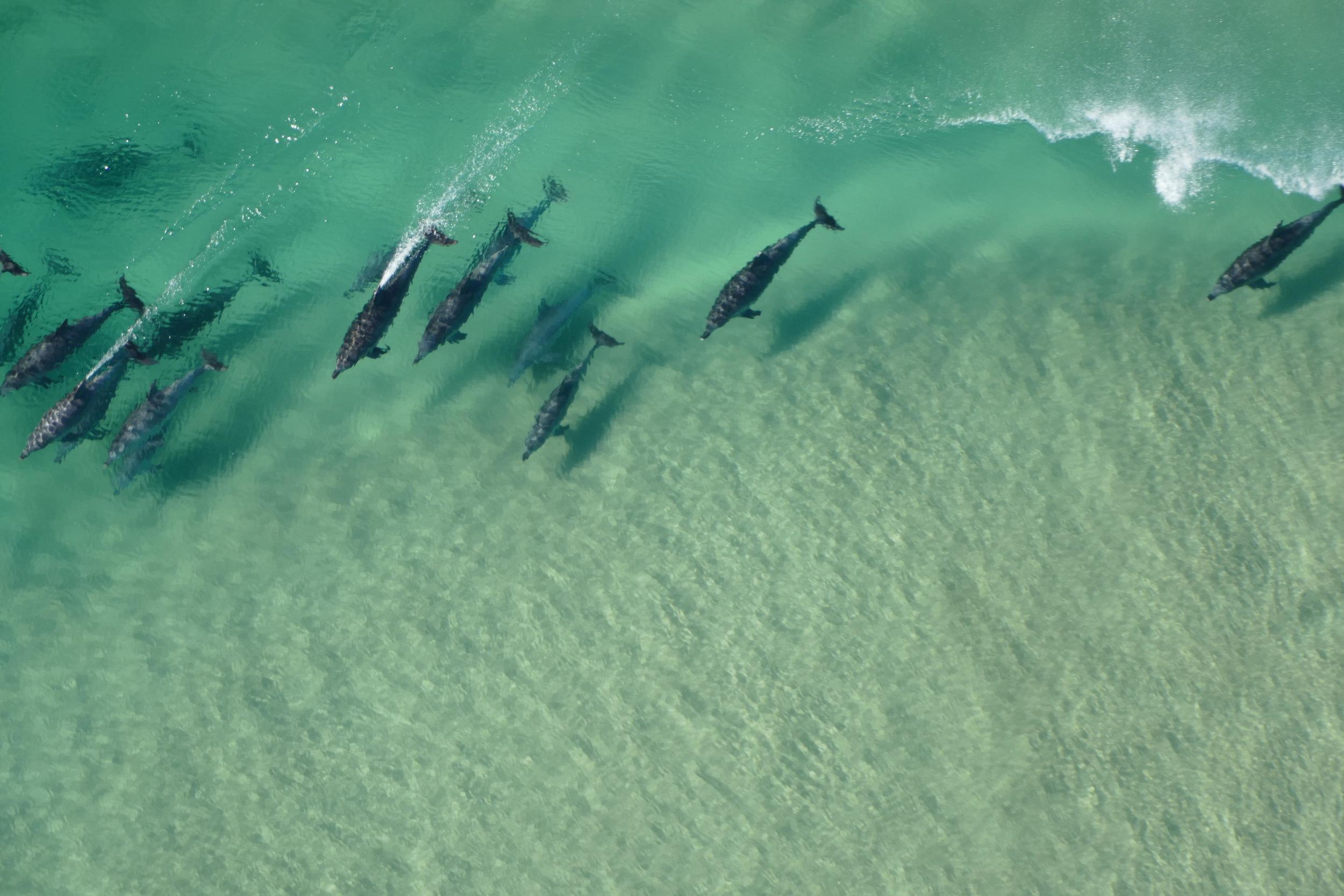 Dolphins-Newcastle.jpg