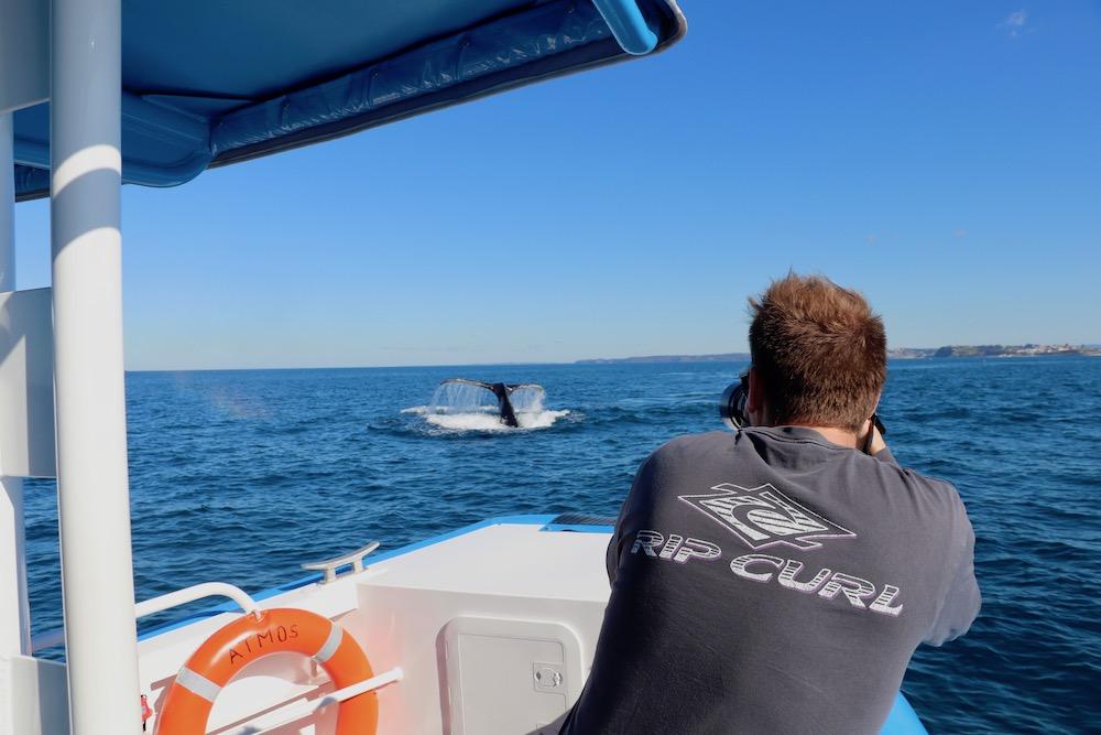 Whale-Photography-Newcastle.JPG