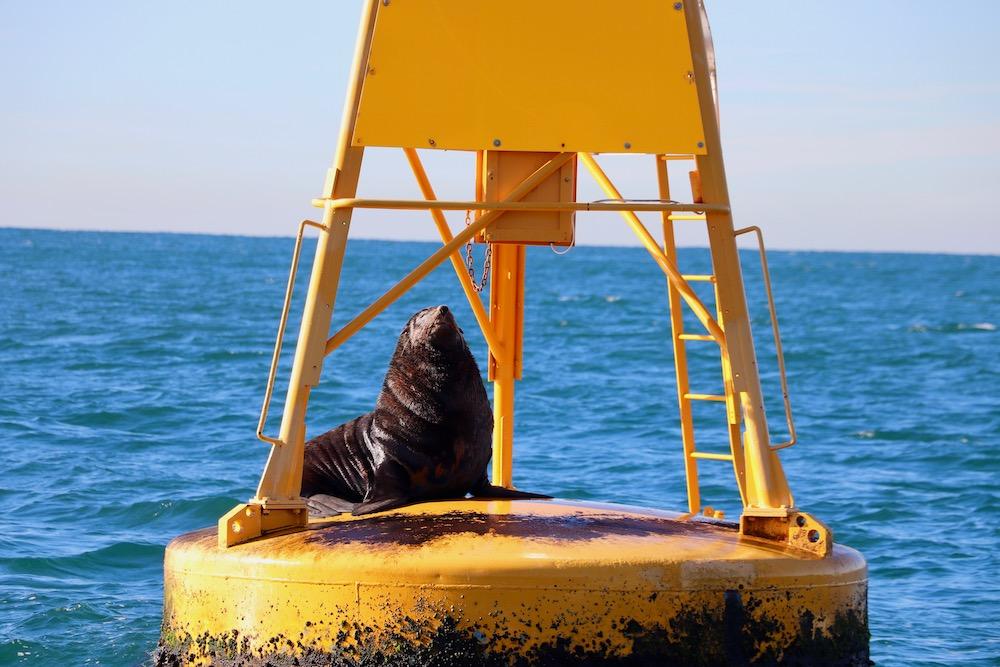 Seal-Newcastle.jpg