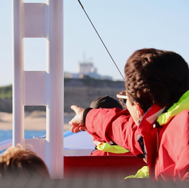Love the feeling of spotting whales, dolphins and seals on our tours! 😀