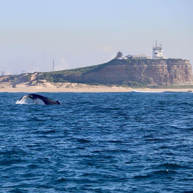Our Encounter Tour incorporates the sights and marine life of the Newcastle coastline all in one! 🐳☀️👌