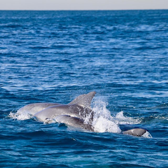 Lately the bottlenose dolphins have been stealing the show! 🐬☀️