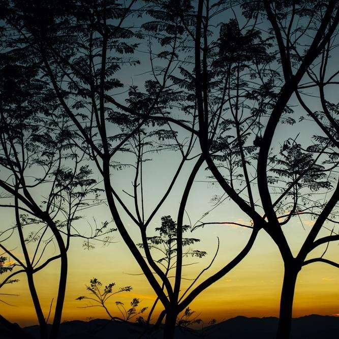 NATURE & LANDSCAPE -