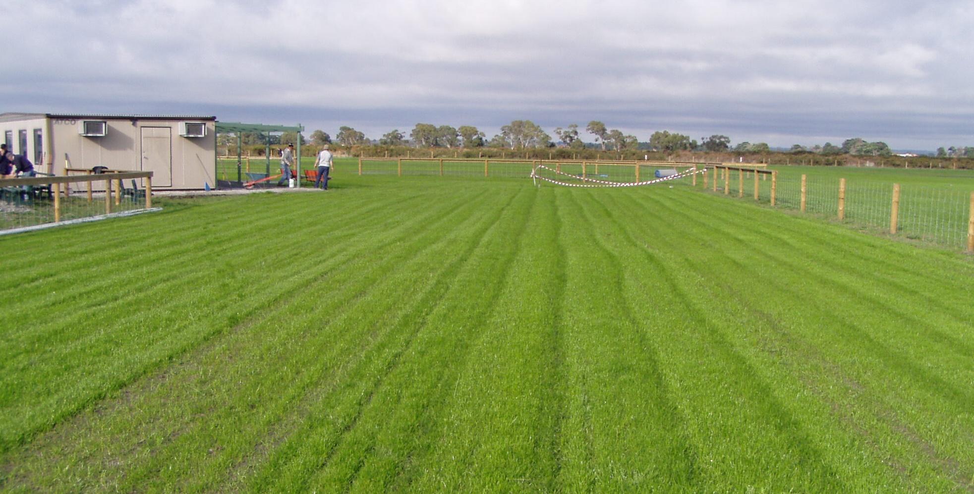 FieldGrass1.jpg
