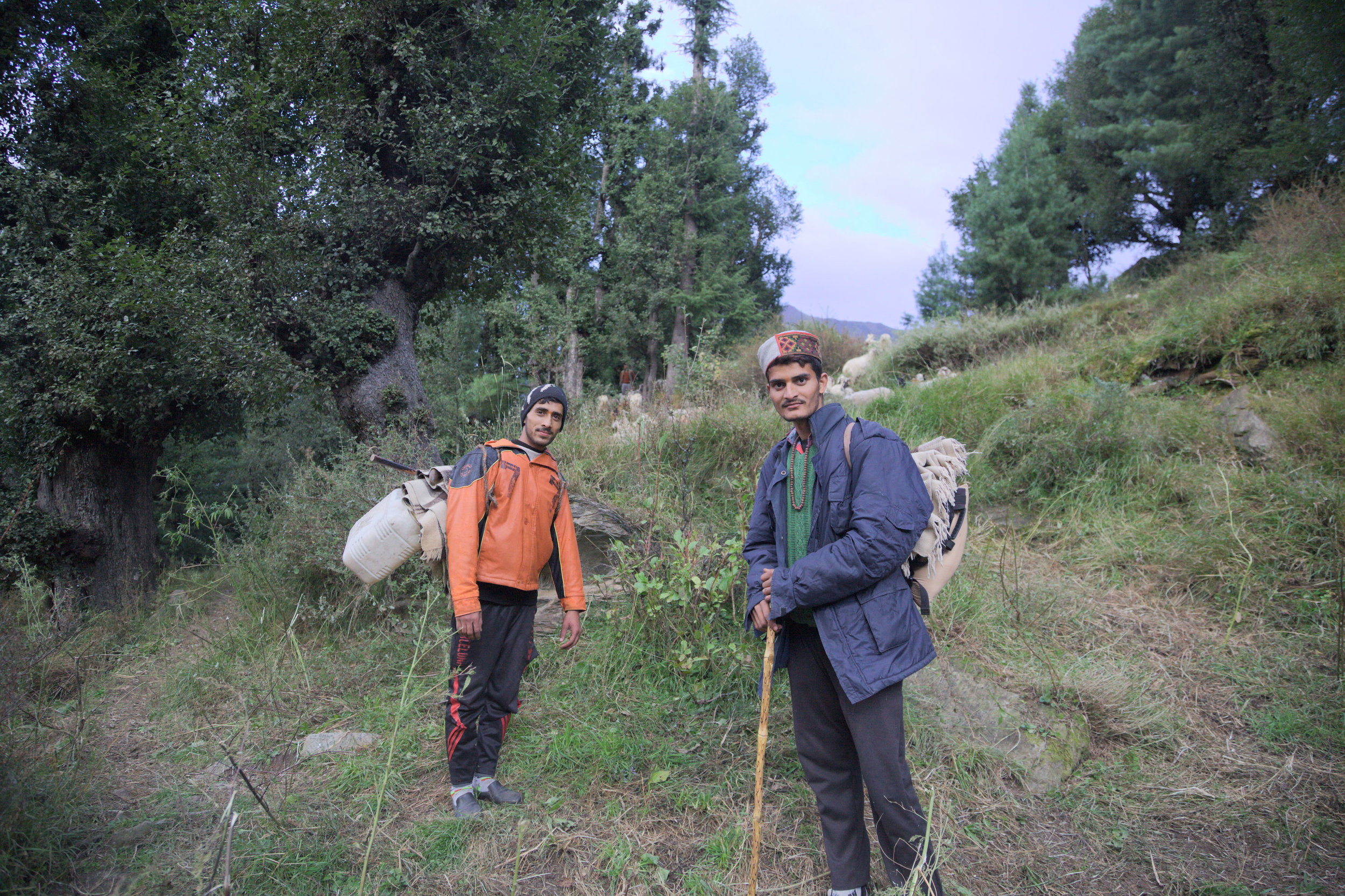 Two Gaddi boys leaving Kuarsi village in Chamba with their flock. Gaddis move between the southern plains of Punjab in the winter, and the high-altitude valleys of Lahaul and Spiti in summer.