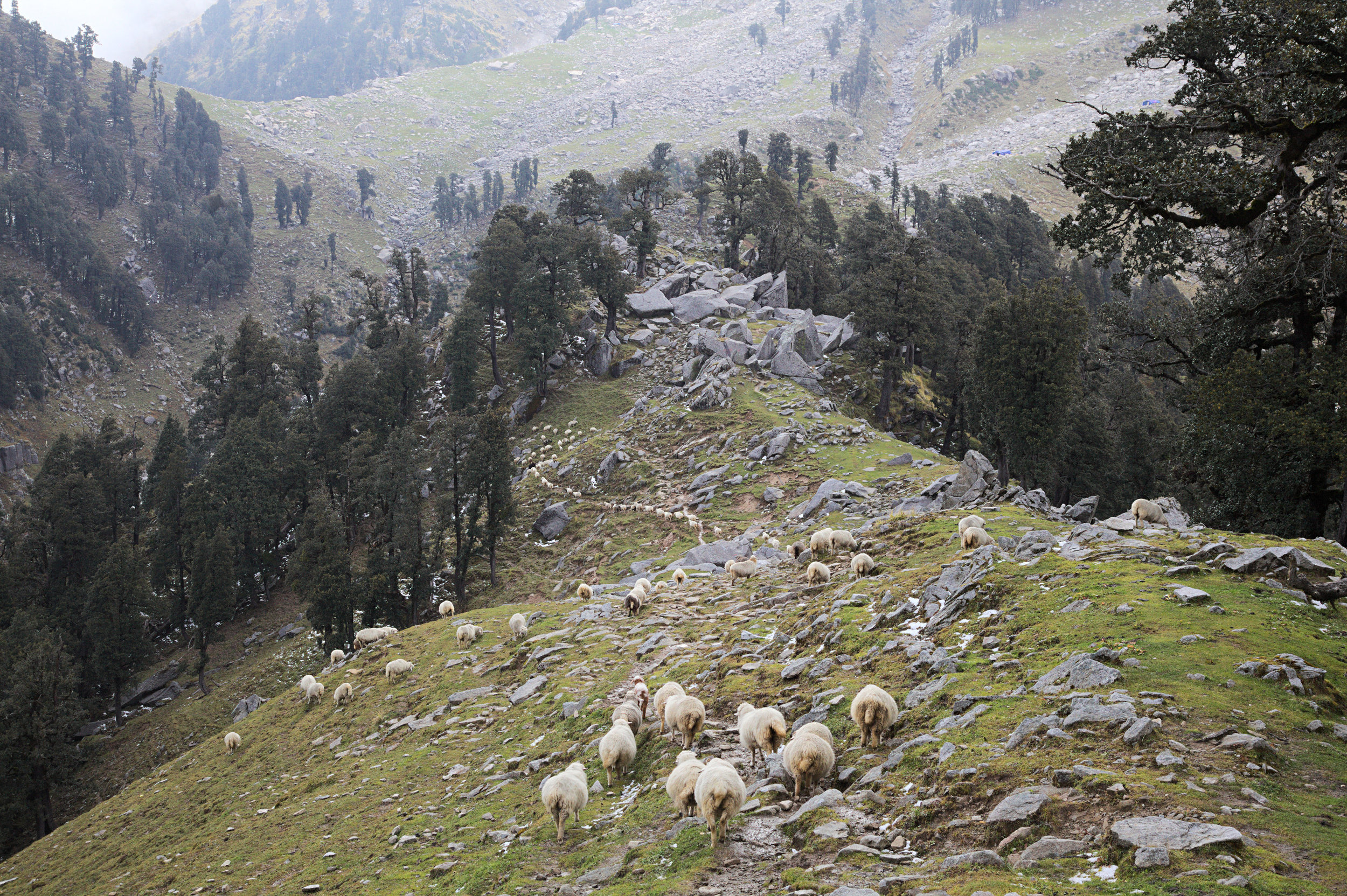 Arjun's flock at Ilaka  got , a grazing ground where Arjun stops for several weeks while waiting for the snow to melt on the mountains above.