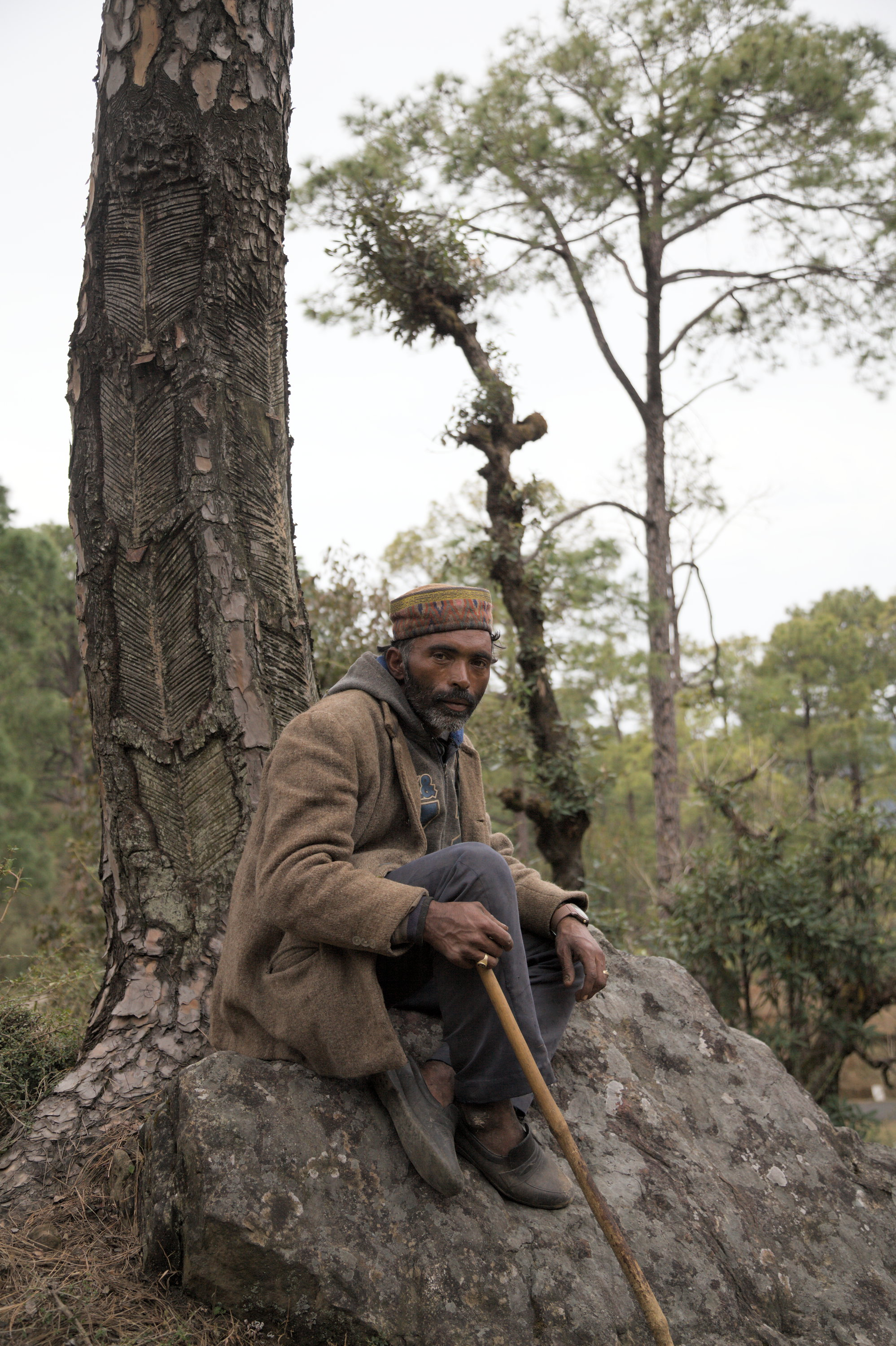 Arjun's workman resting on a rock in the forest. Gaddis work in groups as they need to protect their flocks from bears, leopards and human gangs of thieves.