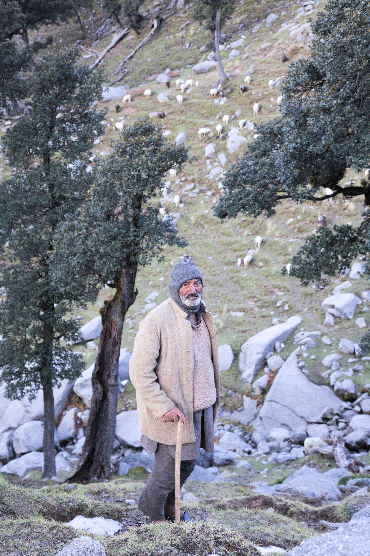 Shepherd at Ilaka  got,  or grazing ground, in the mountains above Dharamsala, Himachal Pradesh