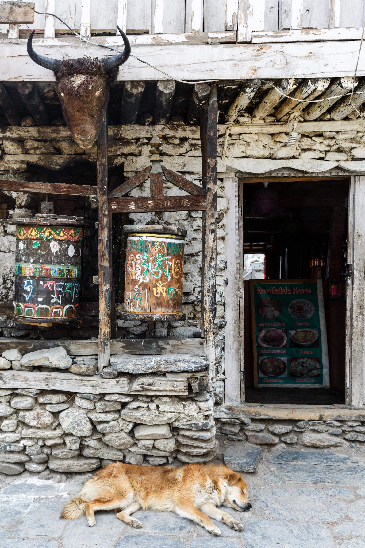 Manang Village on the Annapurna Circuit Trek, Nepal.jpg