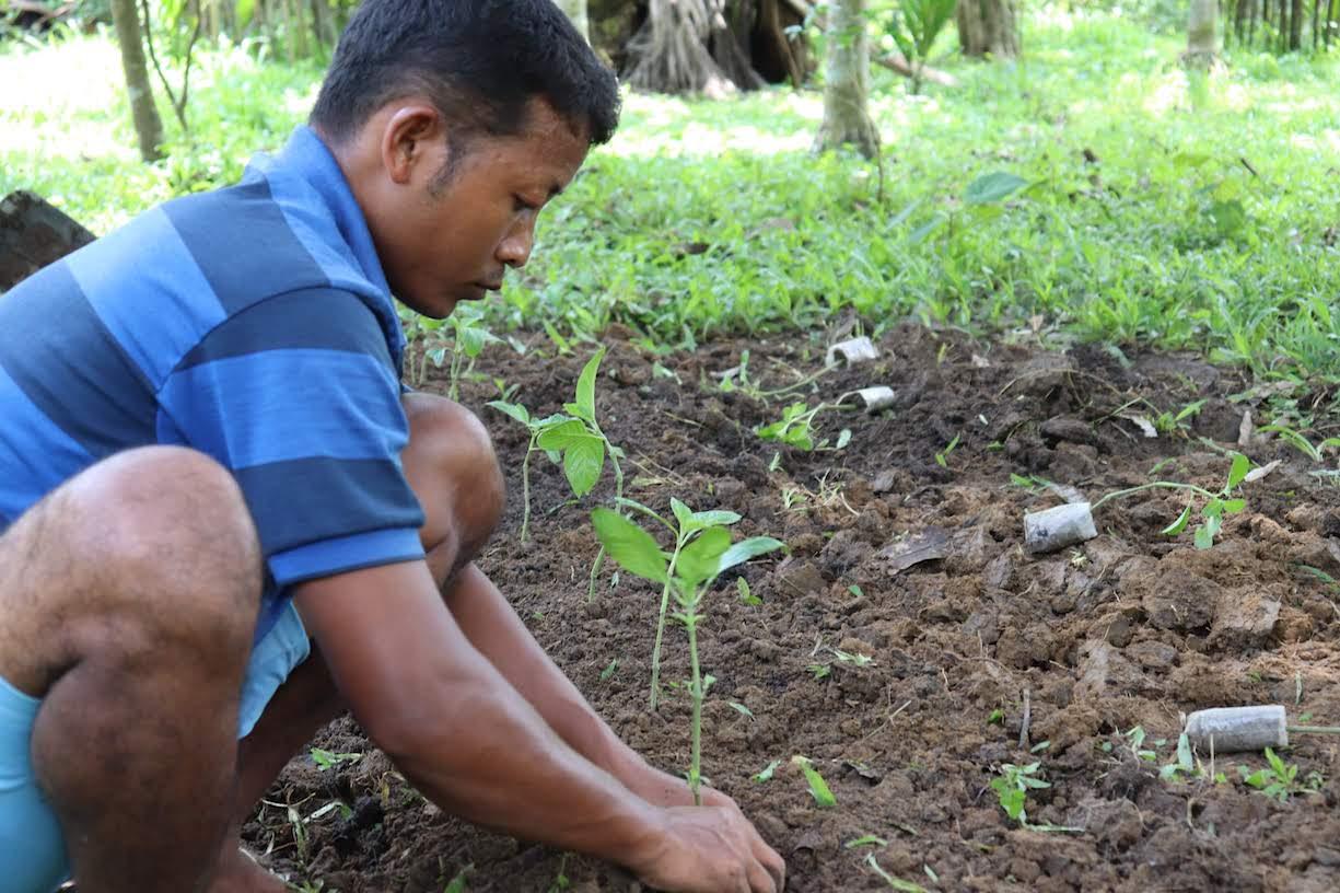 Mosaic Planting - Indigo.JPG