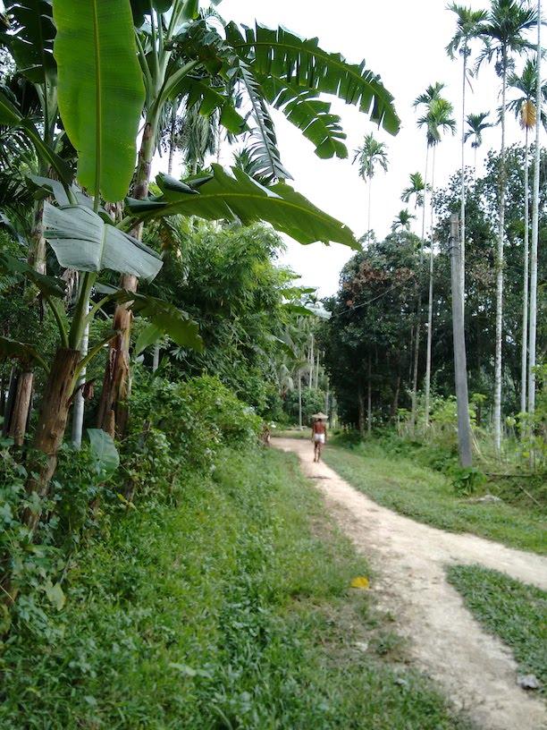 Village Paths.jpg