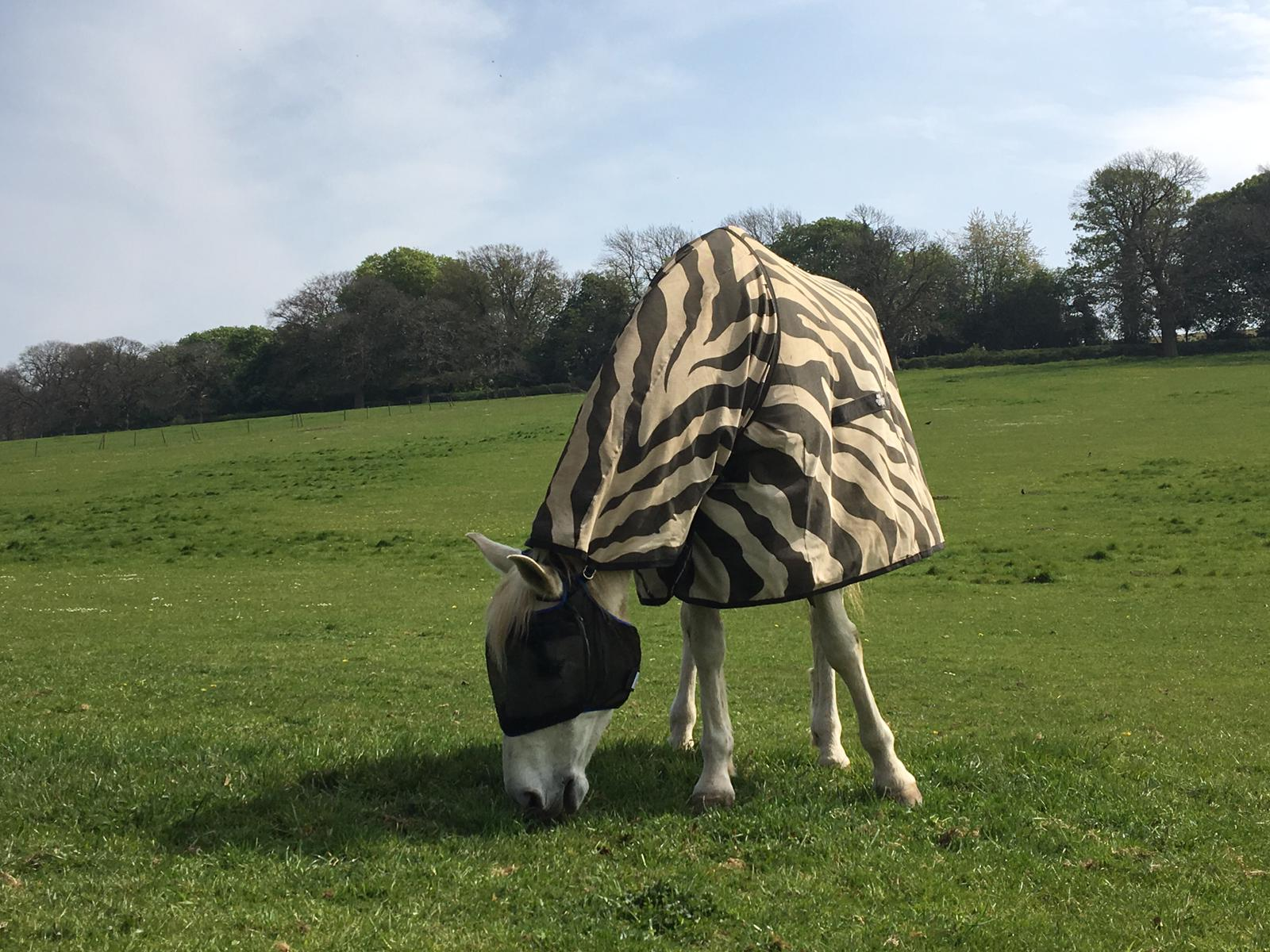 WAS ALEXANDER MCQUEEN INSPIRED BY THIS COOL HORSE WITH A FLY-MASK AND ZEBRA PRINT MAC?