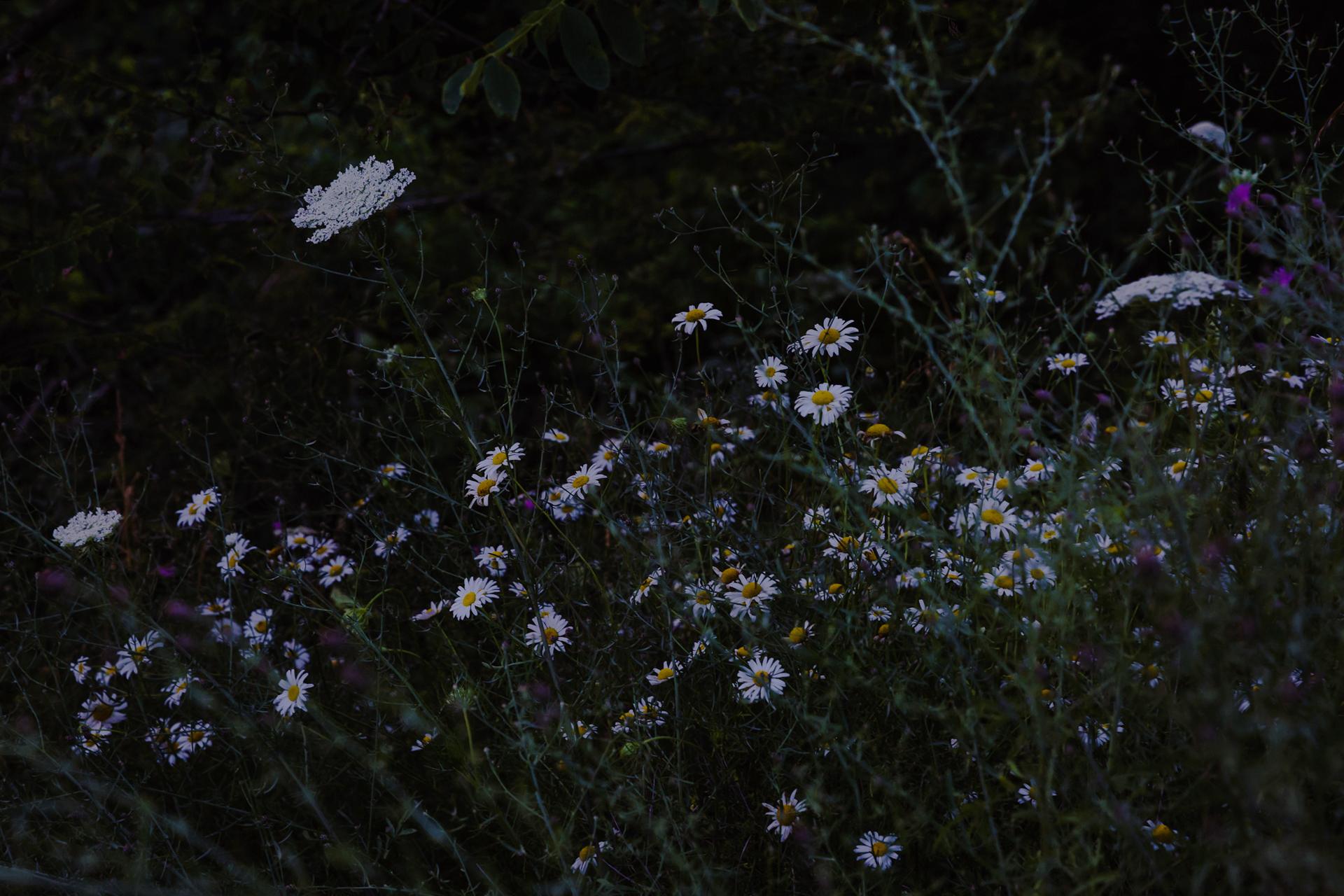 Shenandoahnationalpark-8.jpg