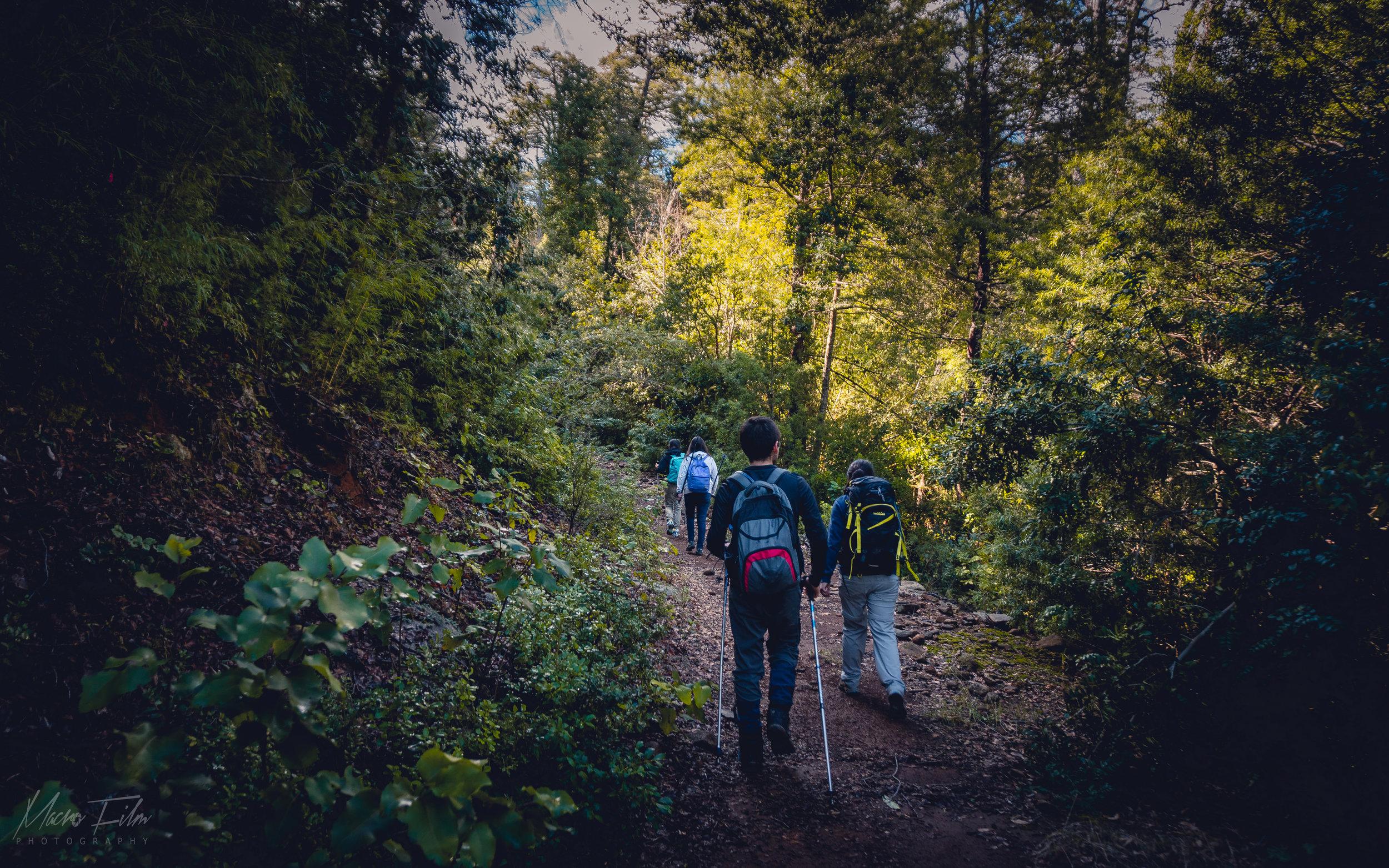 - Caminata Sector Shangri-laCaminaremos rodeados de bosque nativo muy atentos a la fauna con la que nos encontremos de camino. Si lo que tu equipo necesita es desconectarse de la rutina laboral, esta caminata es una muy buena alternativa.